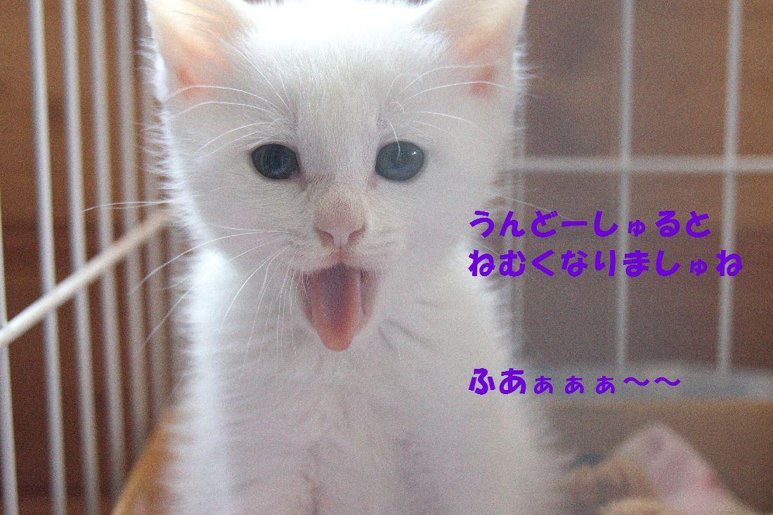 f0197682_238734.jpg
