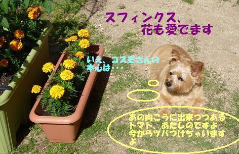 a0154801_2035612.jpg
