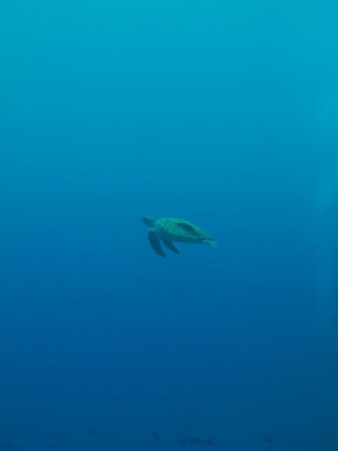 5月23日透明度30mオーバーの海♪_c0070933_20534014.jpg