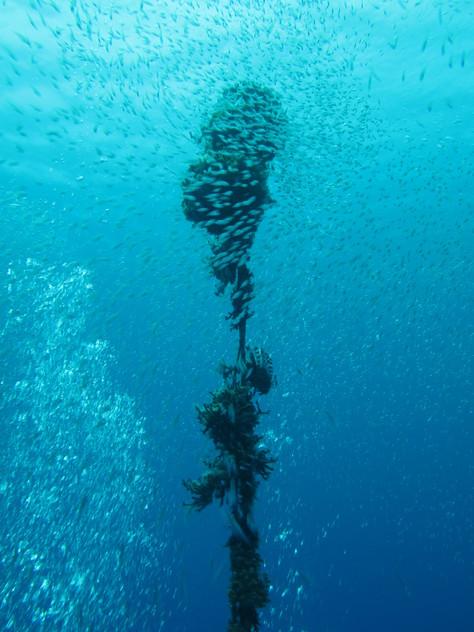 5月23日透明度30mオーバーの海♪_c0070933_20542282.jpg