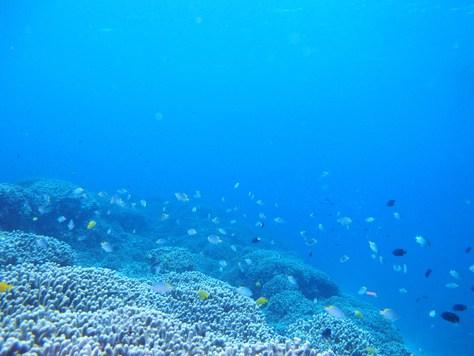 5月23日透明度30mオーバーの海♪_c0070933_20561522.jpg