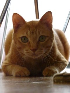 猫のお友だち ちゃーくんちょびくん編。_a0143140_19572978.jpg