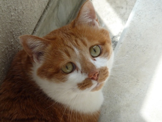 猫のお友だち ちゃーくんちょびくん編。_a0143140_1958634.jpg