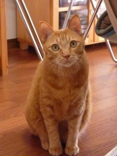 猫のお友だち ちゃーくんちょびくん編。_a0143140_20103221.jpg
