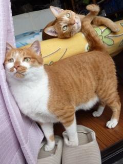 猫のお友だち ちゃーくんちょびくん編。_a0143140_2026299.jpg