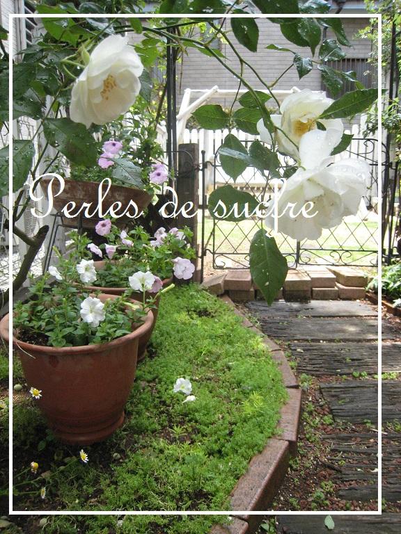 庭のバラ_f0199750_11414364.jpg