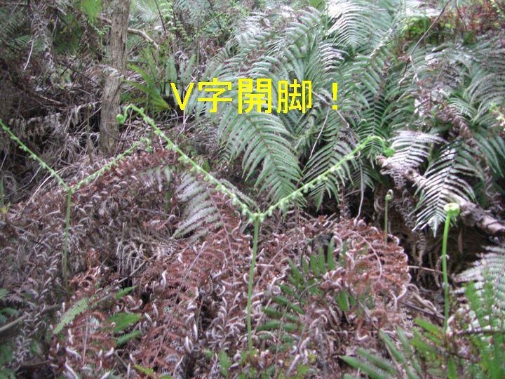 f0053952_13352784.jpg