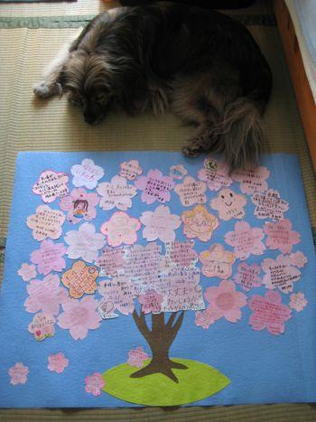 桜プロジェクト  前線 _a0119263_16524339.jpg