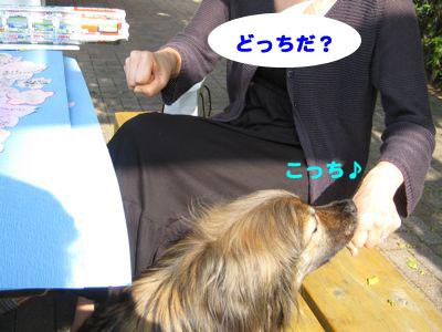 桜プロジェクト  前線 _a0119263_1755545.jpg