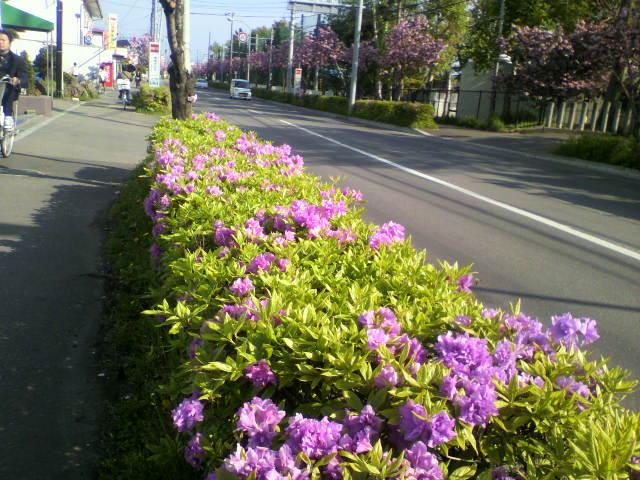 函館のツツジ_b0106766_16352413.jpg