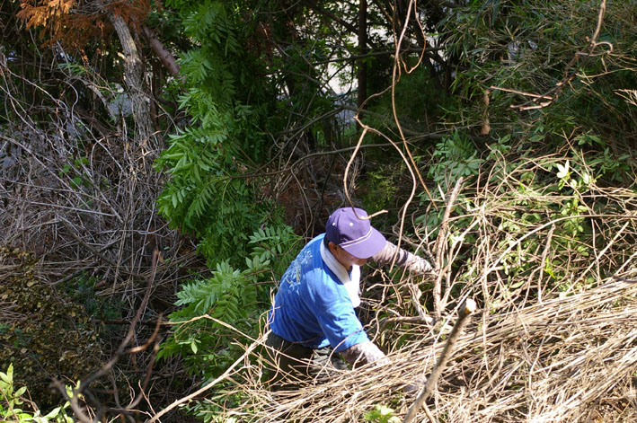 岩瀬中生徒の手入れ地につながる!第5回里山継承PJ_c0014967_1952428.jpg