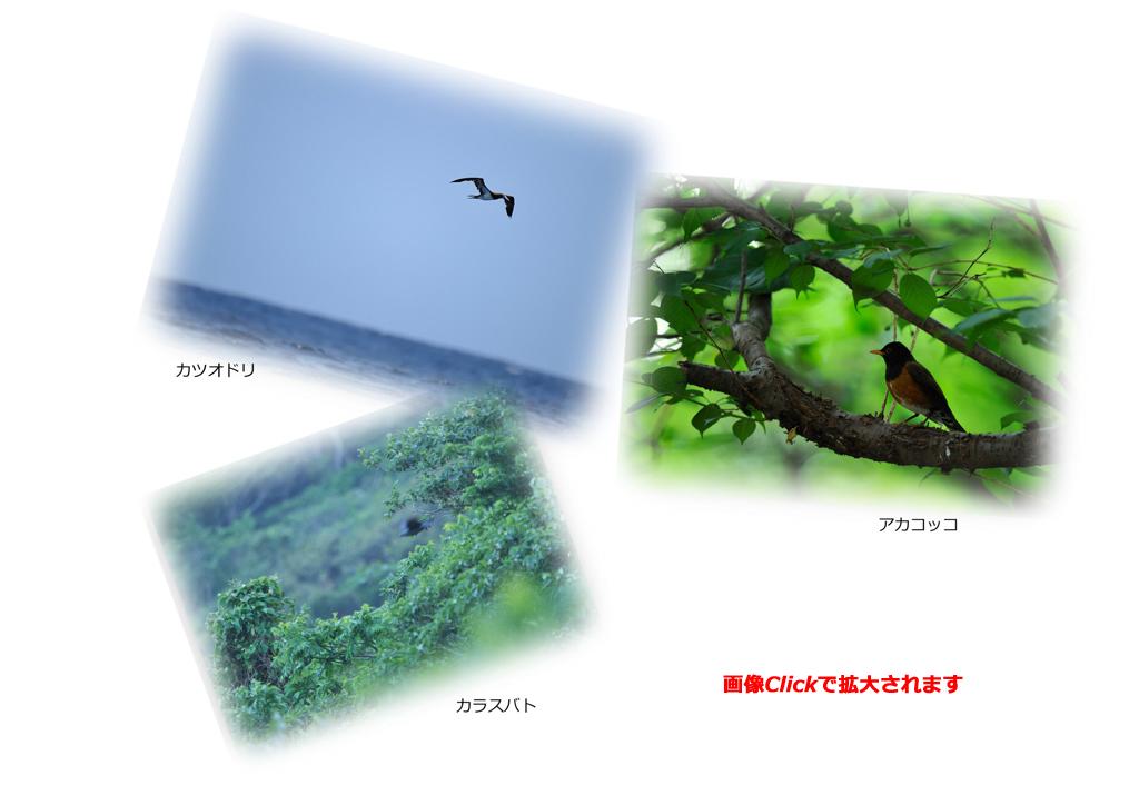 f0176070_23294522.jpg