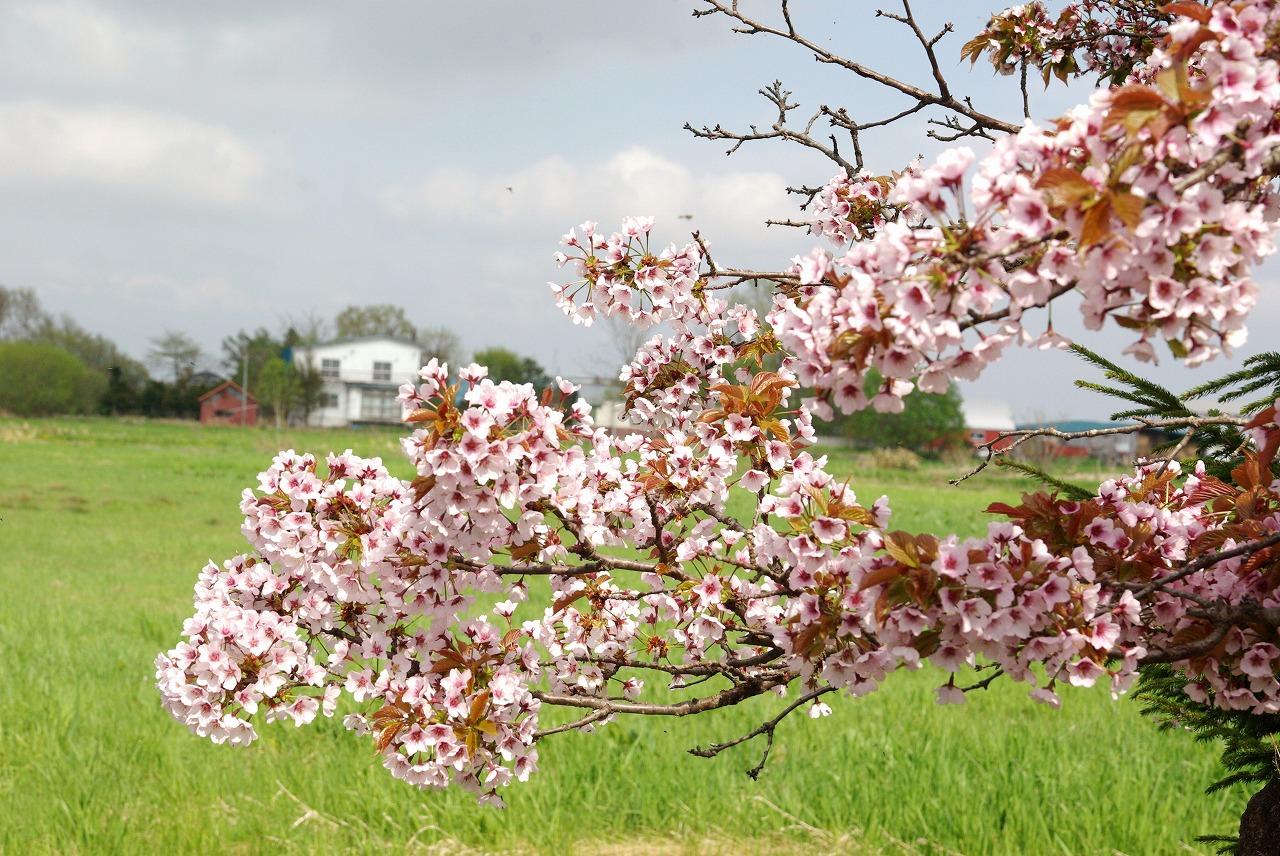 春の収穫まつり(笑)_a0107184_0534480.jpg