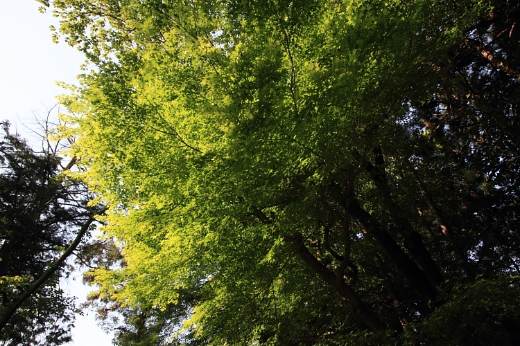大田神社_e0051888_20103214.jpg