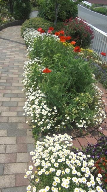 花達が元気をくれました・・・・(85)_d0181492_10123268.jpg