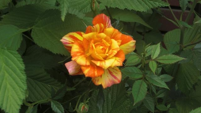 花達が元気をくれました・・・・(85)_d0181492_102630.jpg