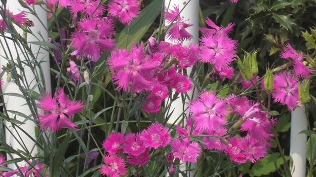 花達が元気をくれました・・・・(85)_d0181492_1033224.jpg