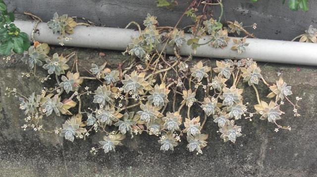 花達が元気をくれました・・・・(85)_d0181492_1034666.jpg