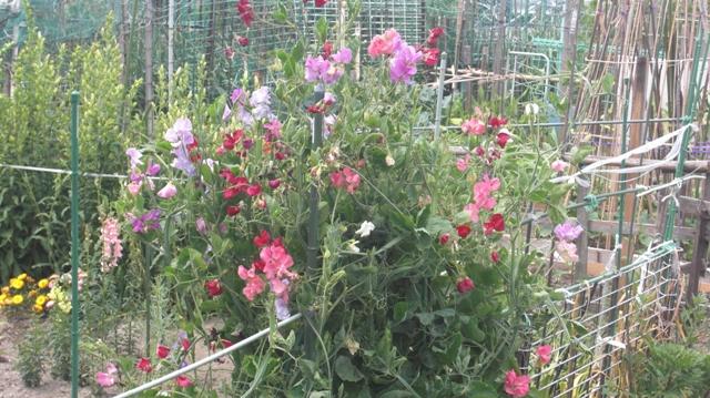 花達が元気をくれました・・・・(85)_d0181492_1043953.jpg