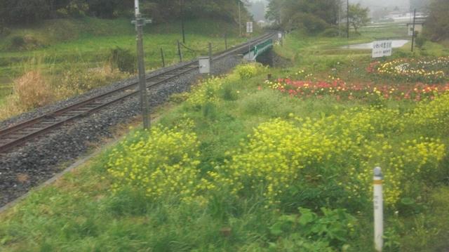 私達は花達と一緒に復興に向かいました。(83)_d0181492_9281474.jpg