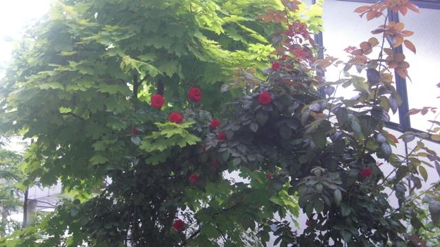 私達は花達と一緒に復興に向かいました。(83)_d0181492_9285458.jpg