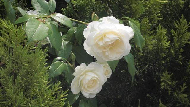 私達は花達と一緒に復興に向かいました。(83)_d0181492_9304760.jpg