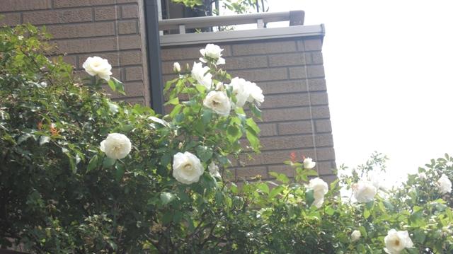 私達は花達と一緒に復興に向かいました。(83)_d0181492_931481.jpg