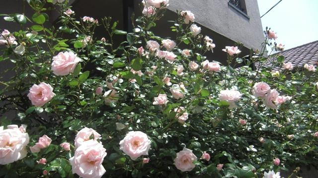 私達は花達と一緒に復興に向かいました。(83)_d0181492_932266.jpg