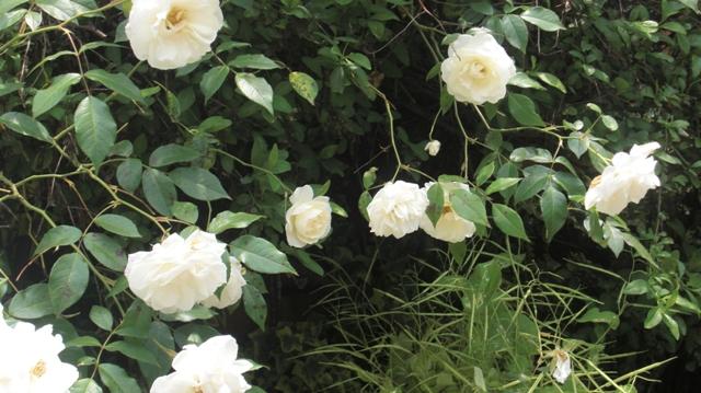私達は花達と一緒に復興に向かいました。(83)_d0181492_9353750.jpg