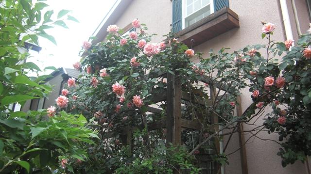 私達は花達と一緒に復興に向かいました。(83)_d0181492_936275.jpg