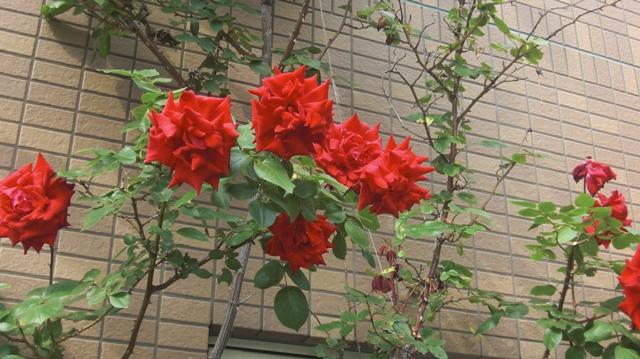 私達は花達と一緒に復興に向かいました。(83)_d0181492_9364634.jpg