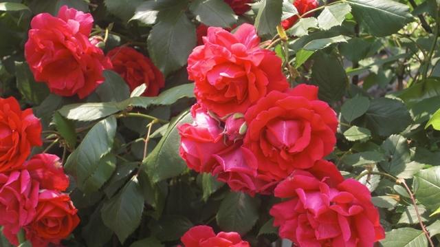 私達は花達と一緒に復興に向かいました。(83)_d0181492_9373110.jpg