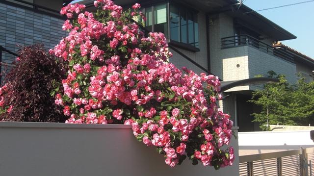 私達は花達と一緒に復興に向かいました。(83)_d0181492_938217.jpg