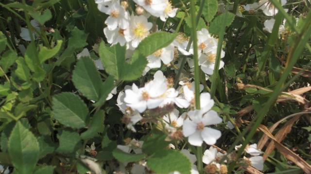 私達は花達と一緒に復興に向かいました。(83)_d0181492_938831.jpg