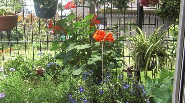 バラの花、春の花が元気に咲いています。(84)_d0181492_9502394.jpg