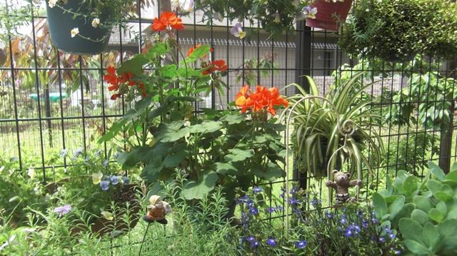 バラの花、春の花が元気に咲いています。(84)_d0181492_9504045.jpg