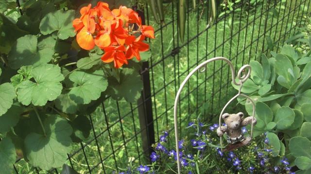 バラの花、春の花が元気に咲いています。(84)_d0181492_9512098.jpg