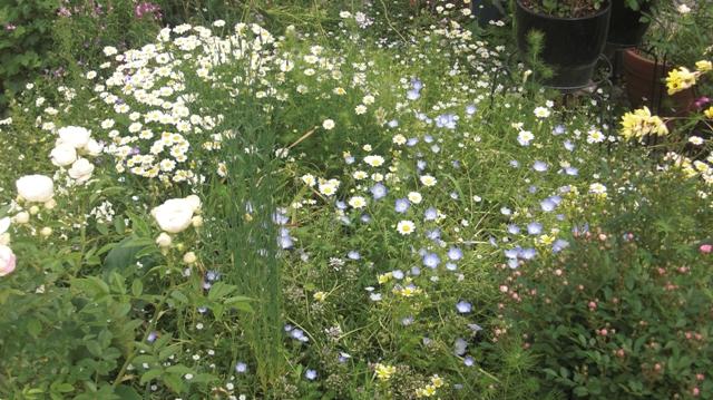 バラの花、春の花が元気に咲いています。(84)_d0181492_9561718.jpg