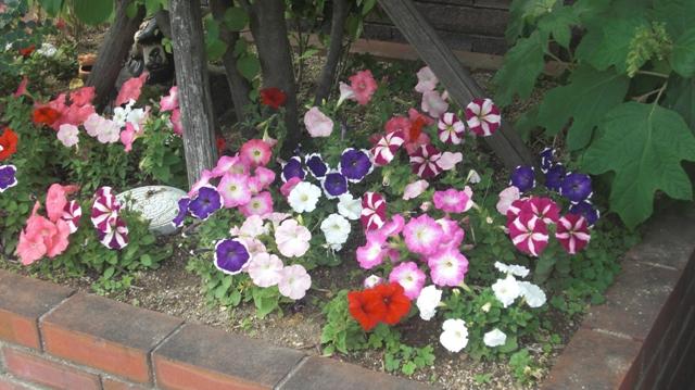 バラの花、春の花が元気に咲いています。(84)_d0181492_9573428.jpg