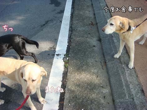 えっちゃん一筋_f0064906_1659620.jpg
