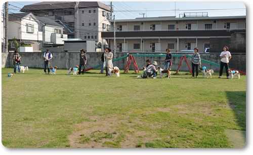 初夏のコイケルオフ☆ゲーム編_c0065512_0593949.jpg
