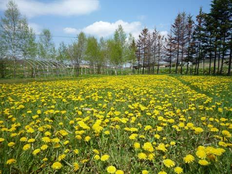 春らしくなったね~♪_f0096216_18264657.jpg