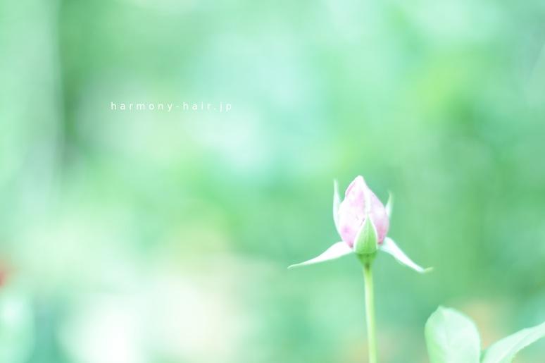 バラの会_c0222817_001312.jpg