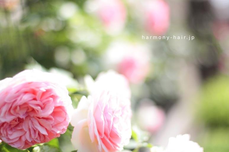 バラの会_c0222817_00415.jpg