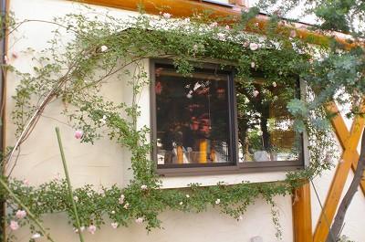 2011.5月 3年目のバラが満開です_c0038619_17544421.jpg