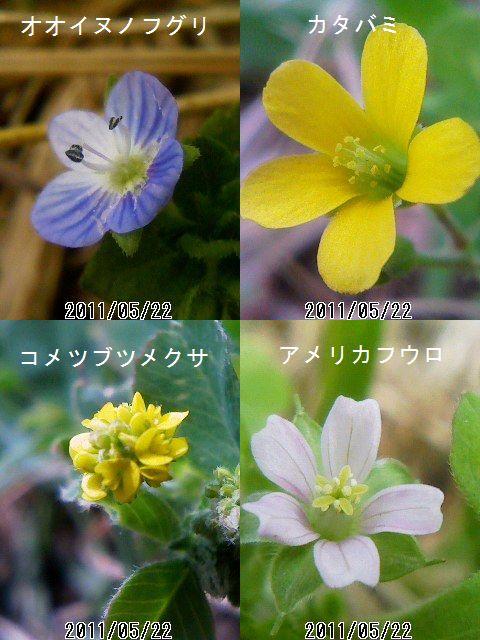 ケータイカメラで野草をマクロ撮影_e0089232_204219.jpg