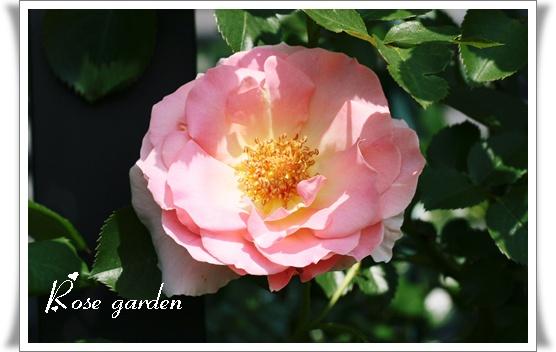 d0043737_23331868.jpg