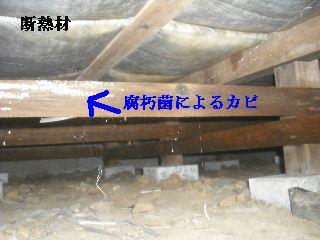 白蟻消毒・・開口部追加_f0031037_1914395.jpg
