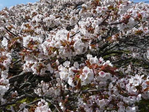 春 ・ ・ ・ かな?(根室より) 5月24日_f0113639_1604031.jpg