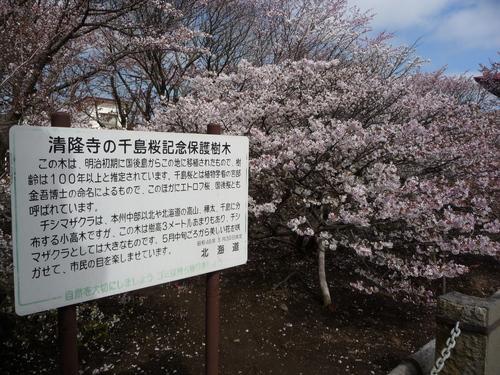 春 ・ ・ ・ かな?(根室より) 5月24日_f0113639_16252659.jpg